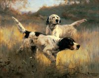 english setters in the field