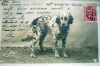 1905_4