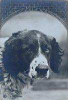 1907_4